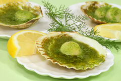 Scallop shell Stock Photography