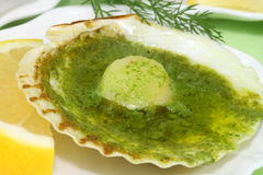 Scallop shell Stock Image