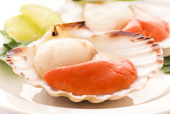 Scallop in Shell Royalty Free Stock Photos