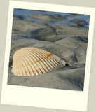 Scallop shell on beach in polaroid frame Stock Image