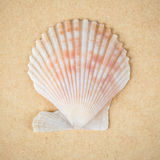 Scallop shell closeup Royalty Free Stock Image