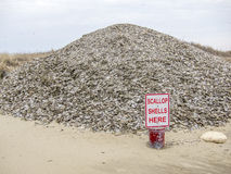 Scallop Shell dump in Nantucket Royalty Free Stock Image