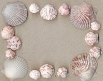 Scallop Shell Frame Stock Photos