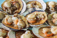 Scallop in Shell garlic fans steamed Stock Photos