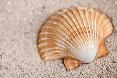 Scallop shell on sand Royalty Free Stock Images
