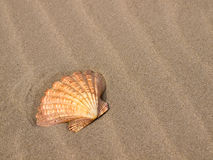 Scallop Shell on a Sandy Beach Royalty Free Stock Images