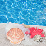 Scallop shell with sea spa  setting Royalty Free Stock Photo