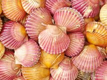 Scallop in Shell Texture Stock Photo