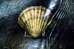 Scallop shell under water Stock Photo