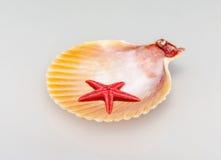 scallop and starfish Stock Photo