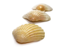 Scallop trio. Of sea shells isolated on a white background Stock Photo