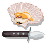 Scallop vector image  Royalty Free Stock Photos