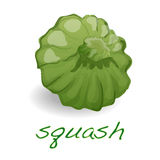 Scalloped custard squash  vector Stock Photos