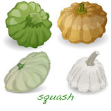 Scalloped custard squash  vector Royalty Free Stock Photo