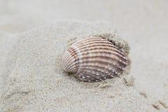 A scalloped shell on Bournemouth Beach. A scalloped shell in the sand at Bournemouth beach, Dorset UK Stock Photos