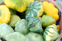 Scalloped Squash Pattypan Royalty Free Stock Images