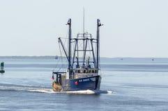 Scalloper blåtthamn i New Bedford den yttre hamnen Arkivbilder