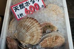 Scallops на стойле свежем в рынке Стоковые Фото