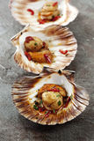 Scallops Stock Photography