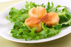 Scallops. Broiled scallops on a fresh salad leaves bed stock images