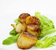 Scallops Royalty Free Stock Image