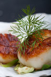 Scallops. Grilled scallops in their shell on a black placemat royalty free stock images