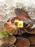 Scallops Royalty Free Stock Images