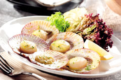 Scallops. A plate of fresh yet delightable scallops royalty free stock photography