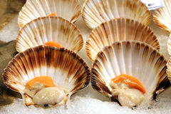 Scallops. Detail, in the fish market royalty free stock photos