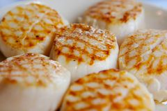 Scallops. Fresh grilled with the grill marks on them royalty free stock images