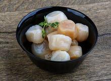 сырцовые scallops Стоковое Фото