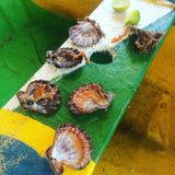 scallops Foto de Stock Royalty Free
