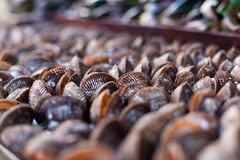 Scallops on asian market Stock Image