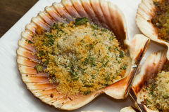 Scallops au gratin. Fresh scallops au gratin in the oven royalty free stock images