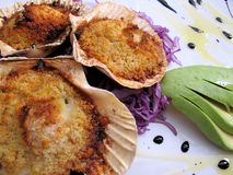 Scallops au gratin. With avocado Stock Photos