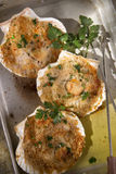 Scallops au gratin. Presentation of scallops au gratin baked with parsley stock images