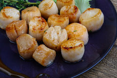 Scallops. Baked scallops with sauce served salad leaves and thyme royalty free stock photo