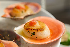 Scallops on banquet table Royalty Free Stock Photos