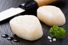 Scallops on black stone plate Royalty Free Stock Image