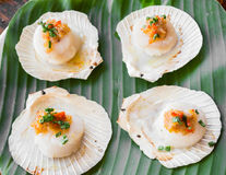 Scallops butter and garlic sauce. On plate Stock Images
