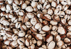 Scallops close up Royalty Free Stock Photography