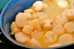 Scallops cozinhados Fotografia de Stock