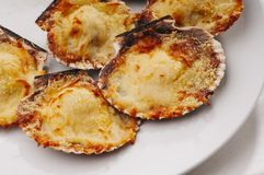 Scallops. Fresh and delicious dish of scallops baked with cheese in its shell stock photos