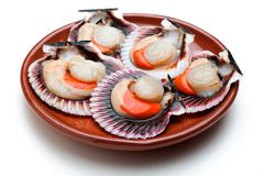 Scallops fresh and raw. Scallops fresh, raw and clean on clay plate Royalty Free Stock Photography