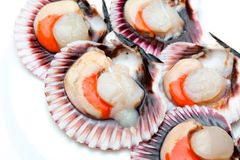 Scallops fresh, raw and clean on wooden board. Scallops zamburiñas fresh, raw and clean on wooden board Royalty Free Stock Photo