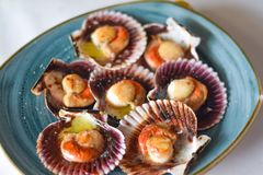 Free Scallops From The Cantabrian Sea With Olive Oil And Salt In A Blue Plate. Spanish Tapas. North Of Spain Stock Photos - 164814683