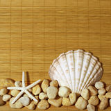 Scallops with gravel Royalty Free Stock Image
