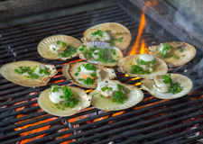 Scallops on Grill. Royalty Free Stock Photo