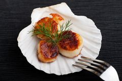 Scallops. Grilled scallops in their shell on a black placemat stock photos