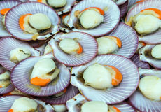 Scallops on ice Royalty Free Stock Images